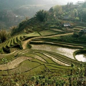 Vietnam/ Terraced rice fields near SaPa